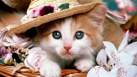 """Képtalálat a következőre: """"cica fotó"""""""